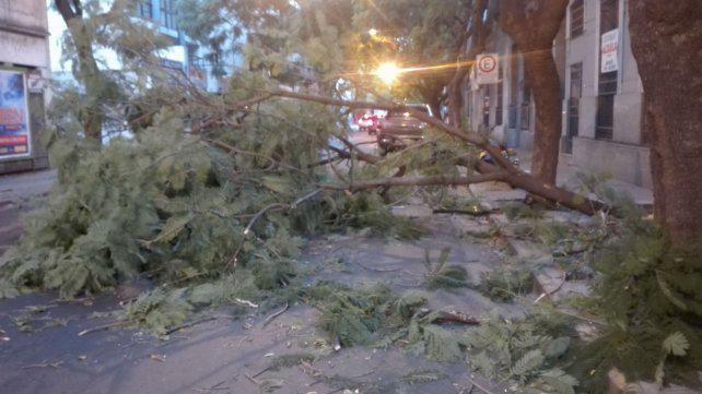 Alertan que las tormentas con intensos vientos serán frecuentes en Rosario