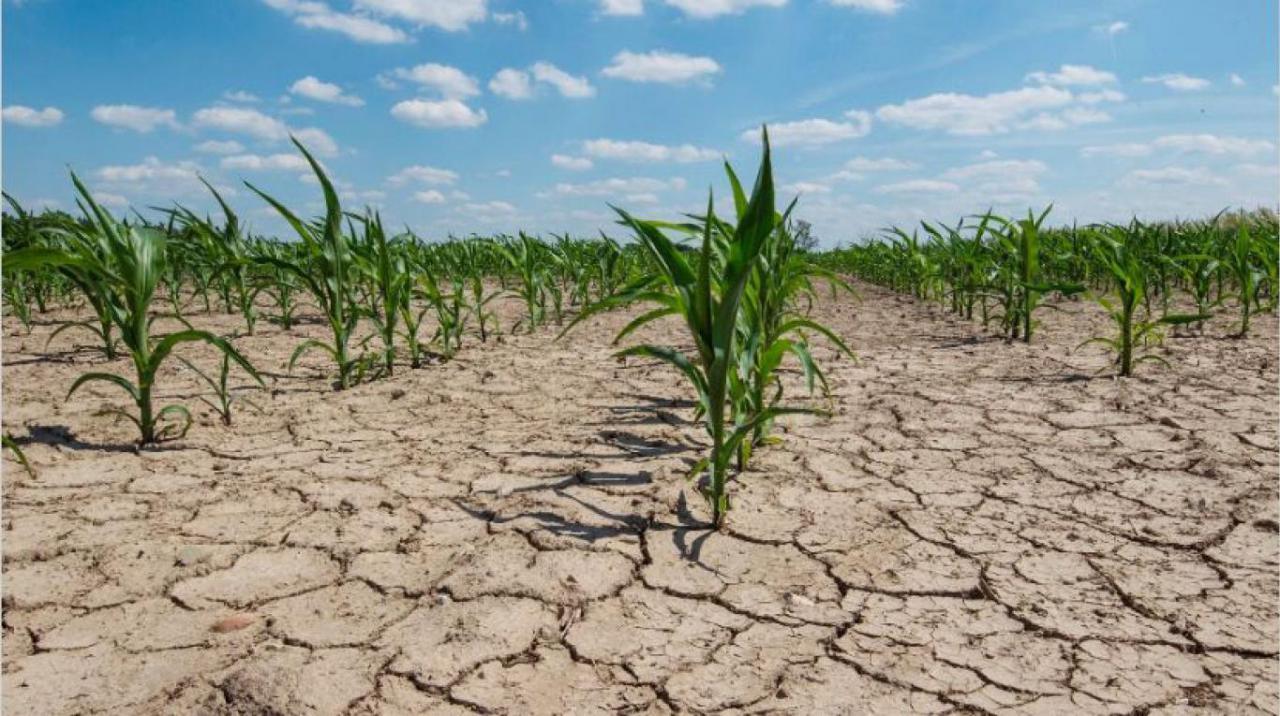 Analizan declarar la emergencia productiva en Santa Fe por la sequía