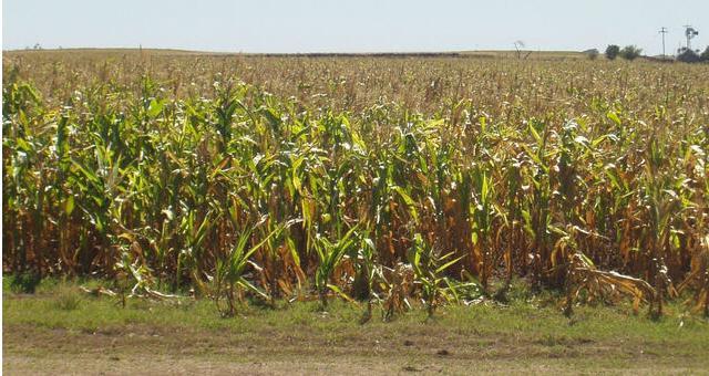 Chacareros estiman pérdidas por $60 mil millones a raíz de la sequía