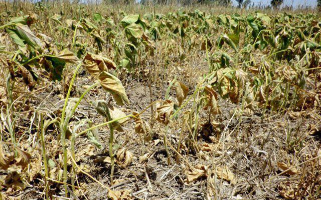 El campo, entre la primavera seca, la suba de retenciones y el alza de costos