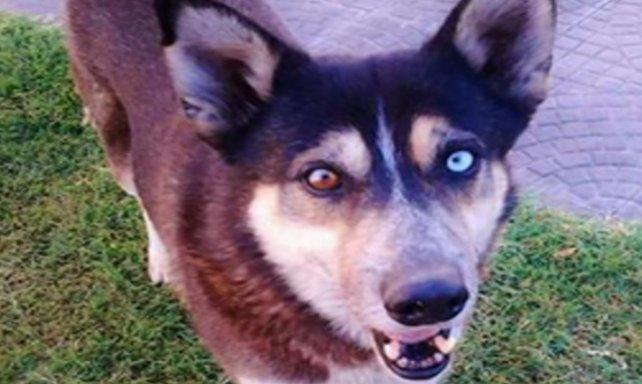 Piden un año de prisión a un rosarino que mató a un perro comunitario