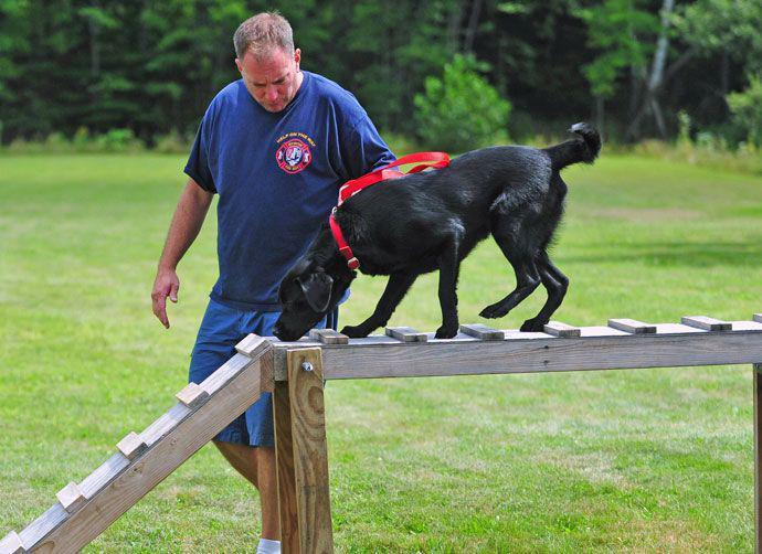"""Una veterinaria dice que no hay """"razas de perro peligrosas"""" pero recomienda asesorarse"""