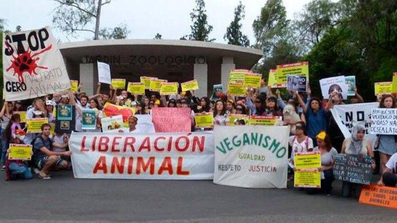 Veganos marcharon contra la matanza de animales en Rosario